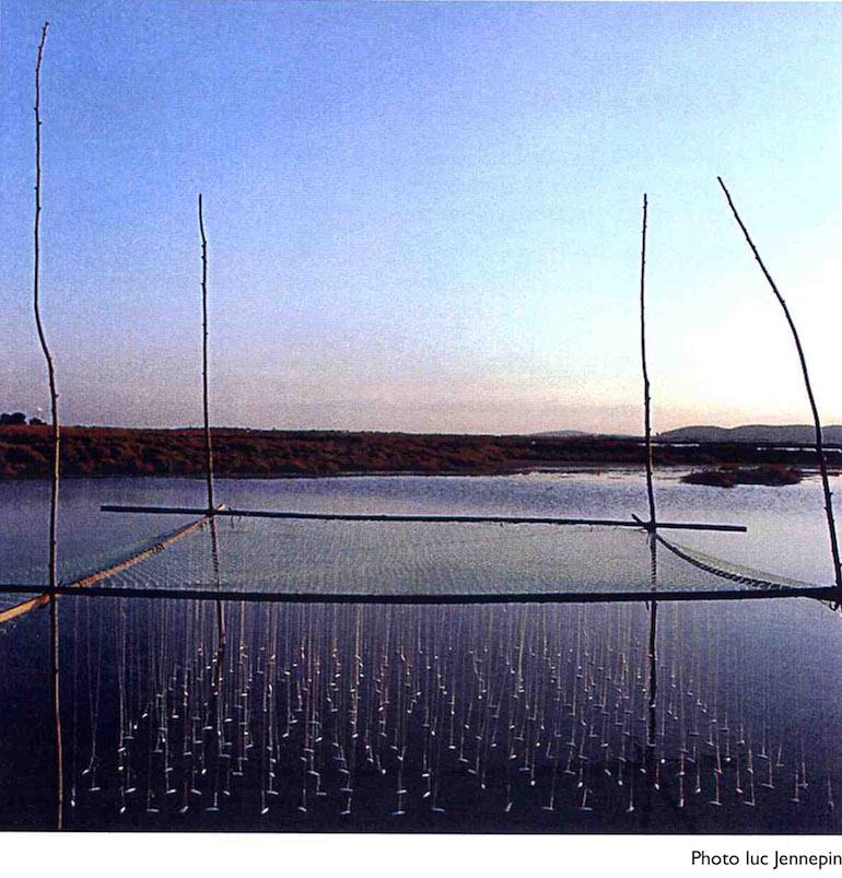 Christine xtine boileau ronds dans l'eau maguelonne