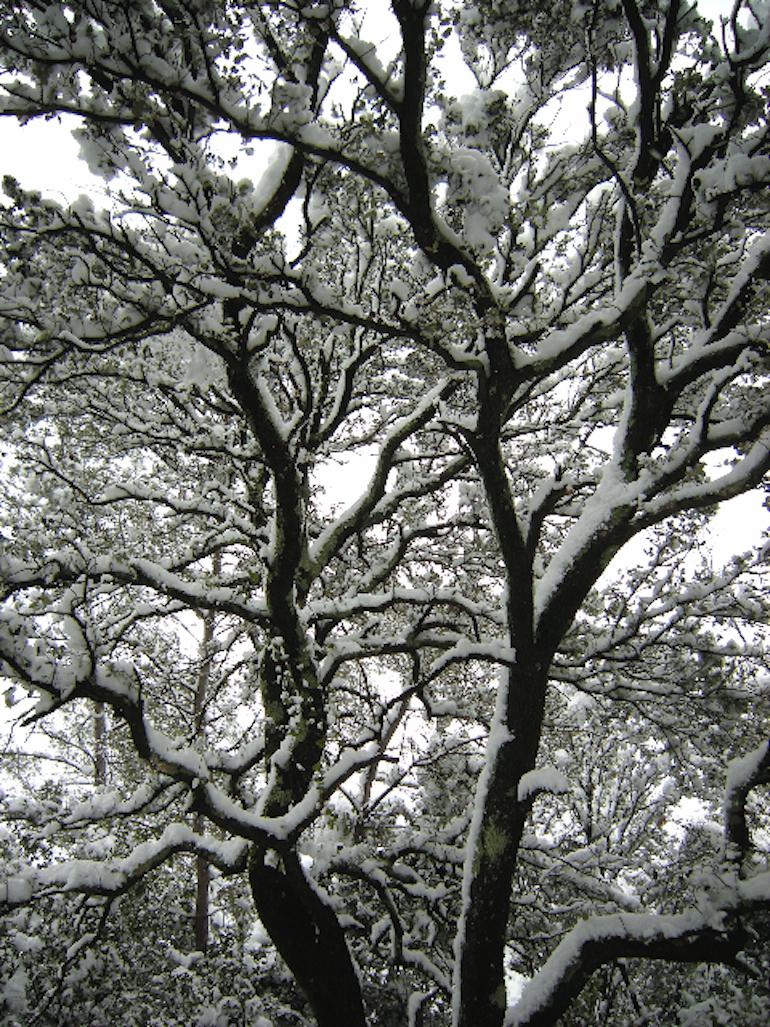xtineboileau christine boileau paysages noir et blanc